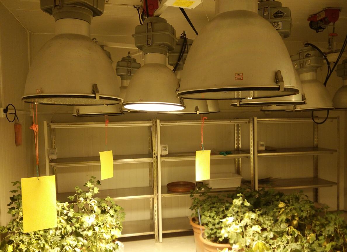 棉花人工气候室