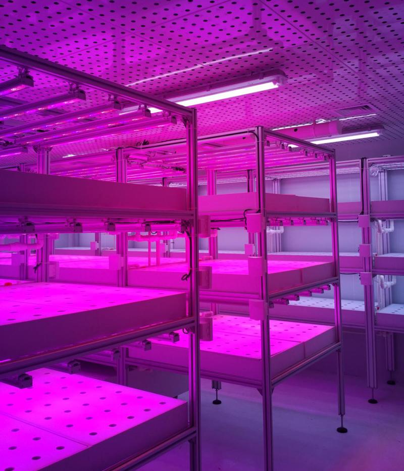 植物水培养室